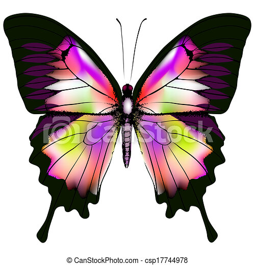 Butterfly - csp17744978