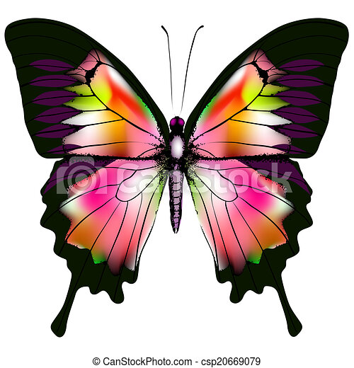 Butterfly - csp20669079
