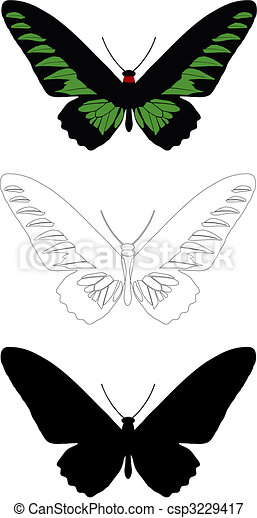butterfly - csp3229417