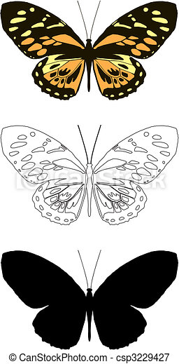 butterfly - csp3229427