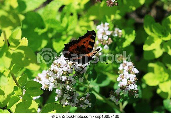 Butterfly in a summer garden - csp16057480