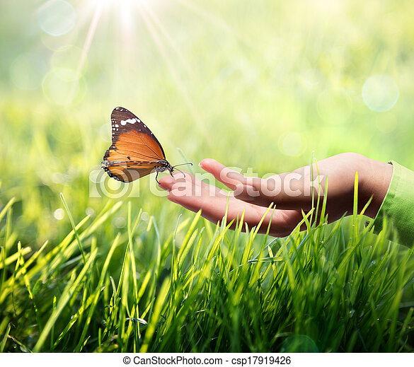butterfly in hand on grass - csp17919426