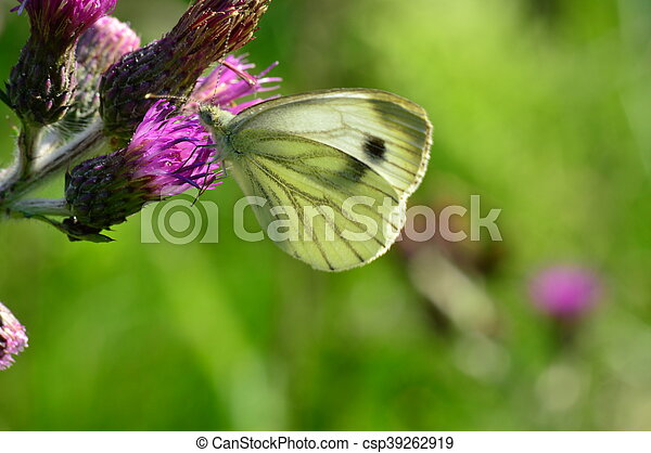 Butterfly in the light of the sun - csp39262919
