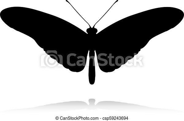 Butterfly Insect Animal Silhouette - csp59243694