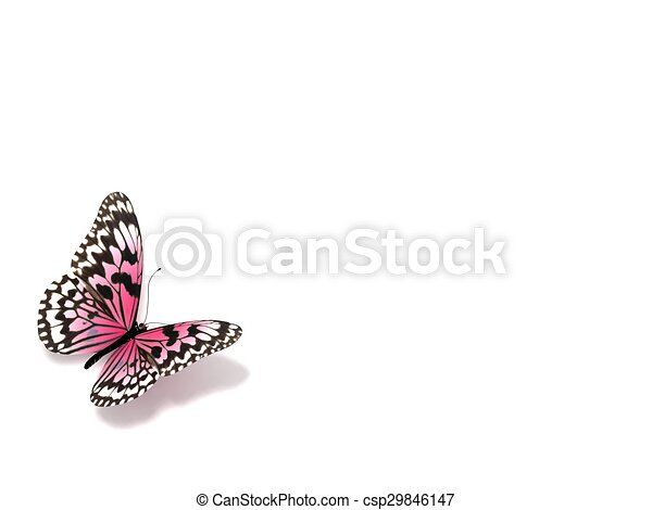 Butterfly. Isolated on white background. - csp29846147