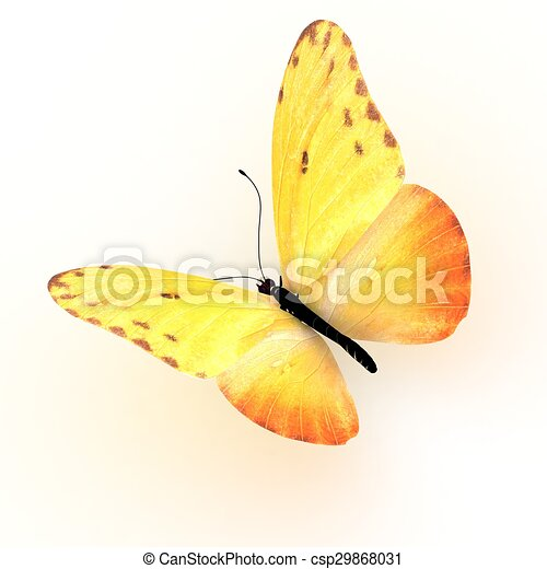 Butterfly. Isolated on white background. - csp29868031