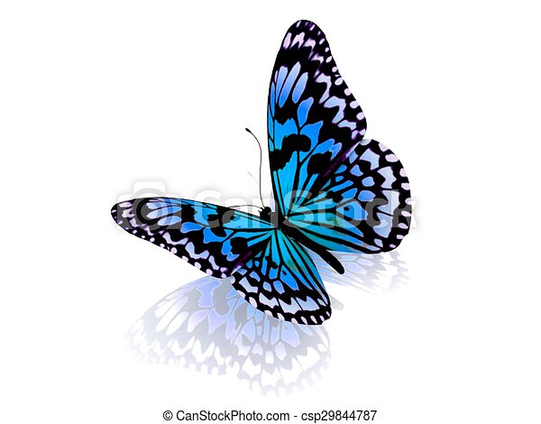 Butterfly. Isolated on white background. - csp29844787