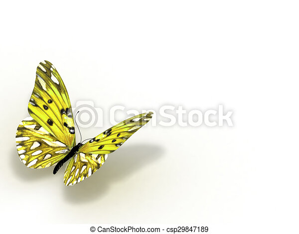 Butterfly. Isolated on white background. - csp29847189