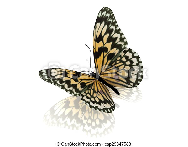Butterfly. Isolated on white background. - csp29847583