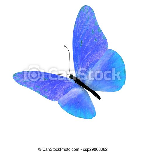 Butterfly. Isolated on white background. - csp29868062