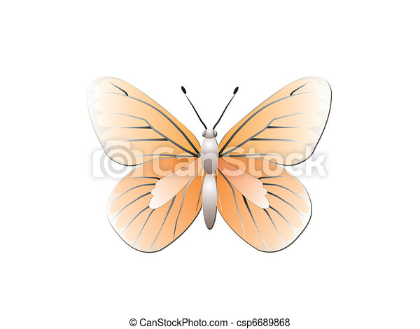 Butterfly isolated on white background - csp6689868