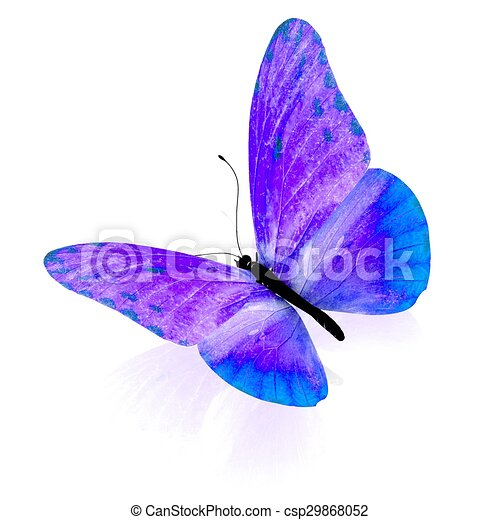 Butterfly. Isolated on white background. - csp29868052