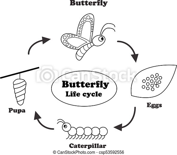 life cycle of a butterfly coloring page - butterfly life cycle in outline style vector butterfly