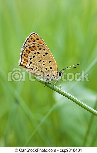 butterfly macro on a blade o grass - csp9318401