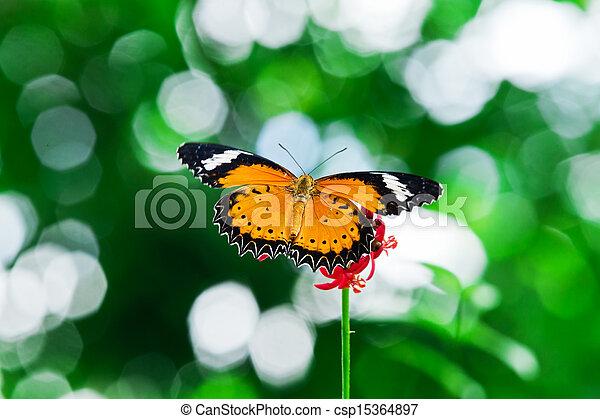 Butterfly nectar. - csp15364897