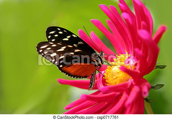 butterfly on a flower - csp0717761