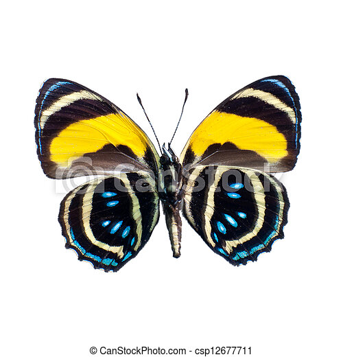 Butterfly on a white background in high definition - csp12677711