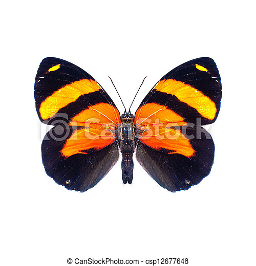 Butterfly on a white background in high definition - csp12677648
