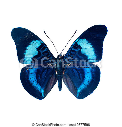 Butterfly on a white background in high definition - csp12677596