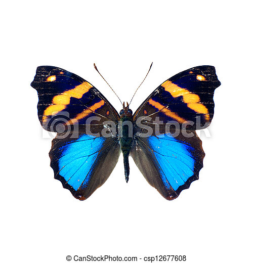 Butterfly on a white background in high definition - csp12677608