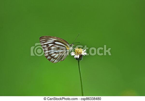 Butterfly on flower in a meadow - csp86338480