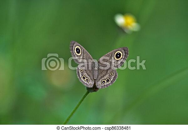 Butterfly on flower in a meadow - csp86338481