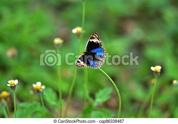 Butterfly on flower in a meadow - csp86338487
