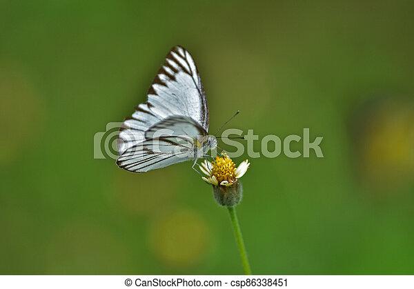 Butterfly on flower in a meadow - csp86338451