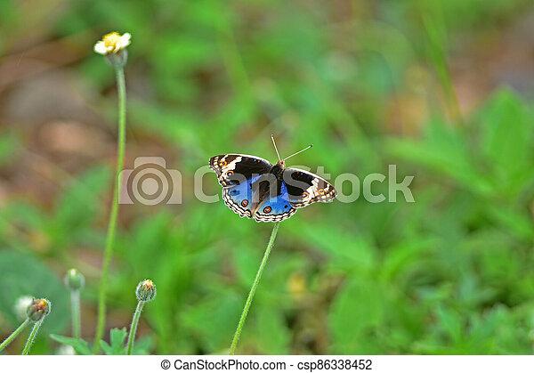 Butterfly on flower in a meadow - csp86338452