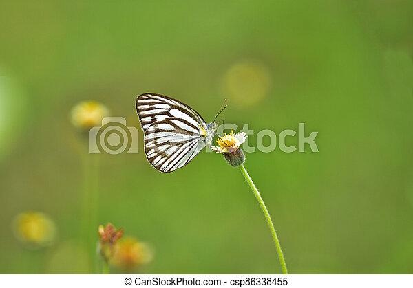 Butterfly on flower in a meadow - csp86338455