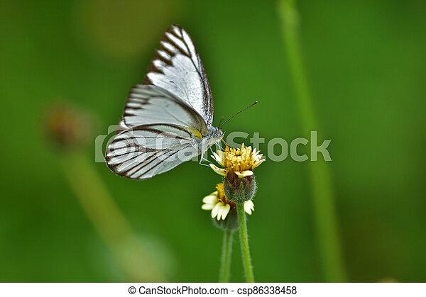 Butterfly on flower in a meadow - csp86338458