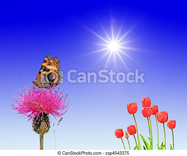 butterfly on flower under bright sun - csp4543375