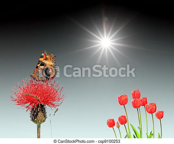 butterfly on flower under bright sun - csp9100253