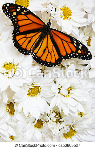 Butterfly on Flowers - csp0605527