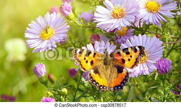 Butterfly On Flowers Butterfly On Spring Flowers Header For Website