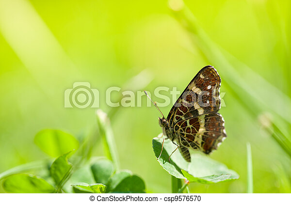 Butterfly on green grass in spring day - csp9576570