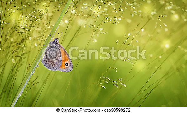 Butterfly on green grass panoramic view - csp30598272