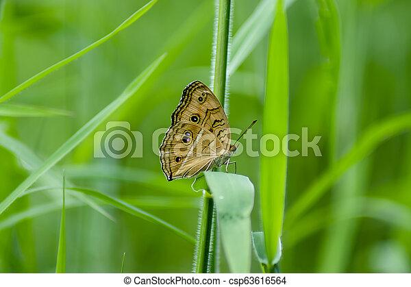 butterfly on green grass - csp63616564