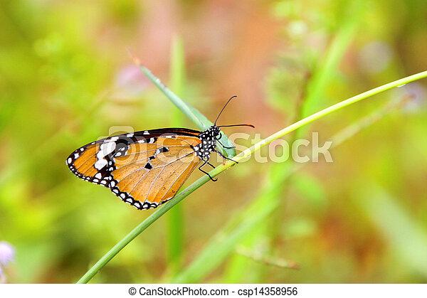 Butterfly on green grass - csp14358956