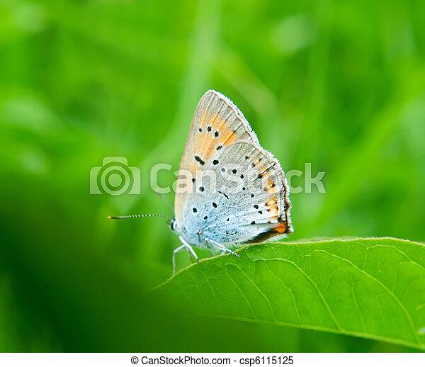 butterfly on green grass - csp6115125