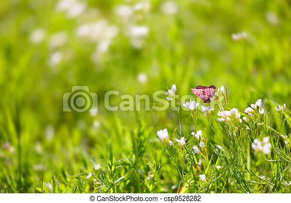 Butterfly on green grass - csp9528282