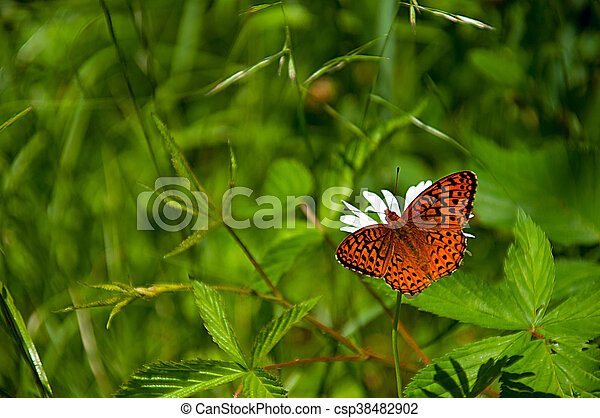 Butterfly on green grass - csp38482902