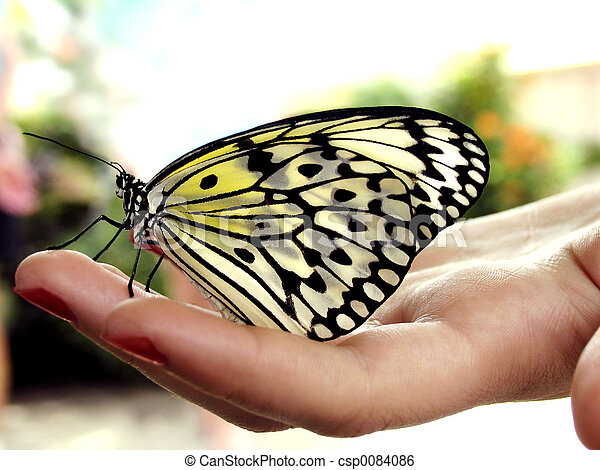 Butterfly on hand - csp0084086