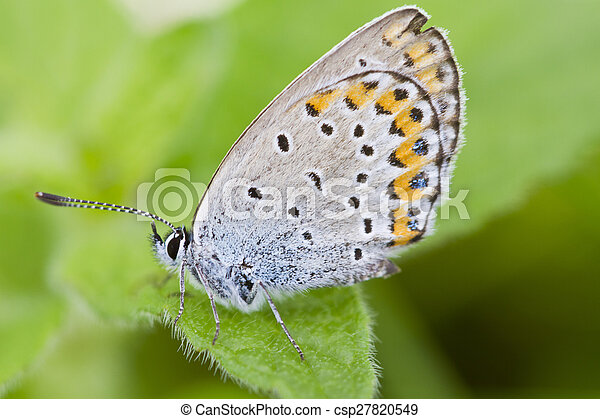 butterfly on leaf - csp27820549