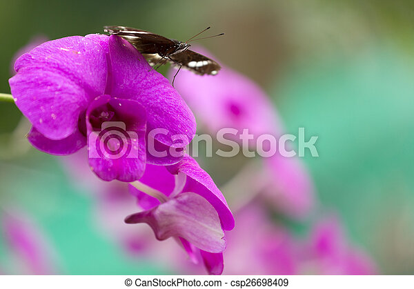 Butterfly on orchid - csp26698409