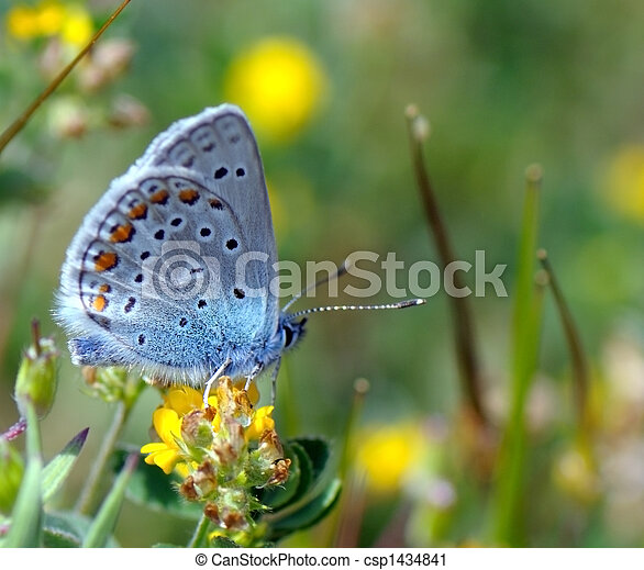 butterfly on yellow flower - csp1434841