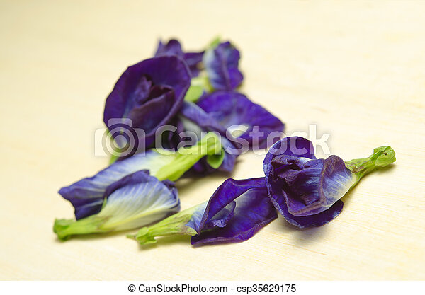 Butterfly pea or blue pea flowers isolated on white background butterfly pea or blue pea flowers isolated on white background csp35629175 mightylinksfo