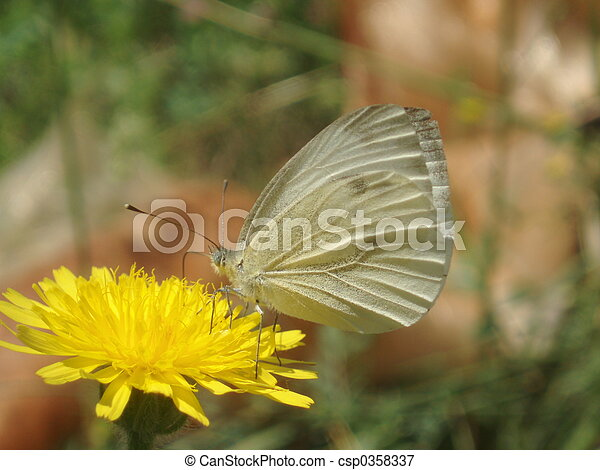 Butterfly - csp0358337