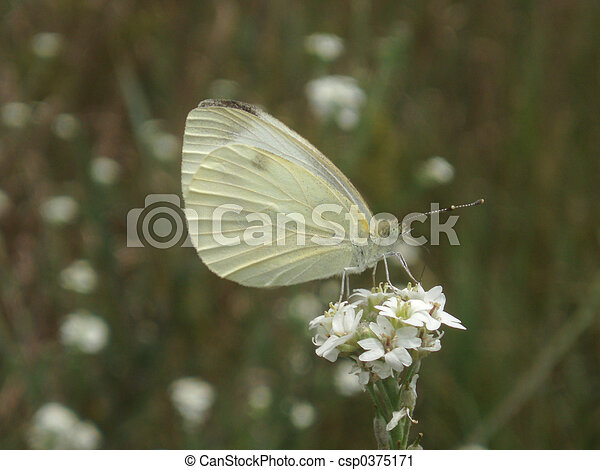 Butterfly - csp0375171