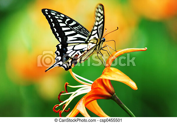 Butterfly - csp0455501